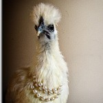 chicken with pearls